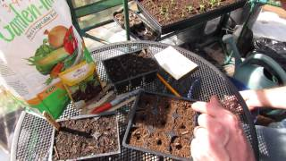 How to Seed Start Beets in Seed Cells: Great Cool Weather Vegetables - MFG 2014