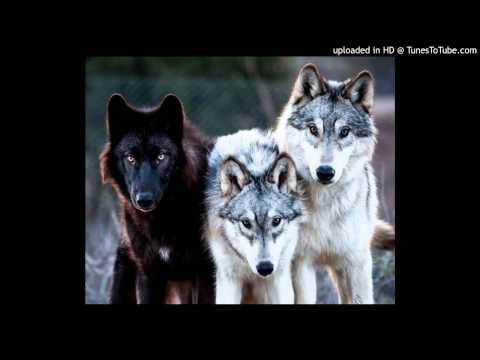 Pretty Girls Make Graves - Grandmother Wolf