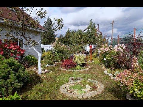 Утренняя розово-бордовая нежность сада. 21.09.2018 год