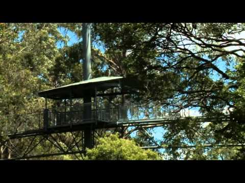 Otway Fly Treetop Adventures Video