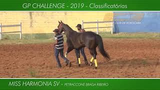 Apresentação dos animais GP CHALLENGE 2019 - Class.
