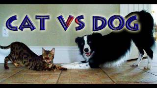 Cat vs Dog: A Trick Contest