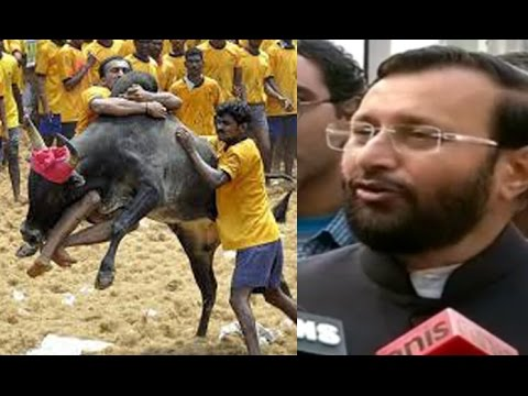 Timely Decision Regarding Jallikattu : Prakash Javadekar video
