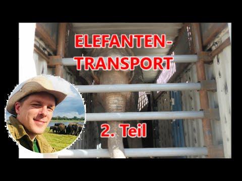Elefanten-Transport: Wie kommt der Elefant in die Kiste?