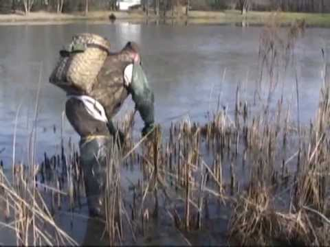 Muskrat trapping with colony traps and body grip traps in muskrat dens