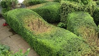 topiary top tips