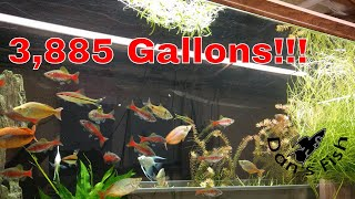 HUGE Fishroom Tour! Rare Killifish & More!!!