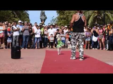 Así se vivió el primer Carnaval Canino y concurso de mascotas.