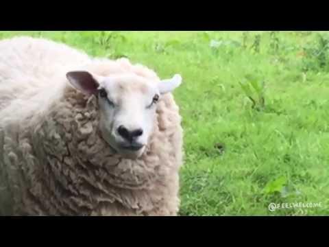 魅惑的すぎる羊の破壊力(笑)