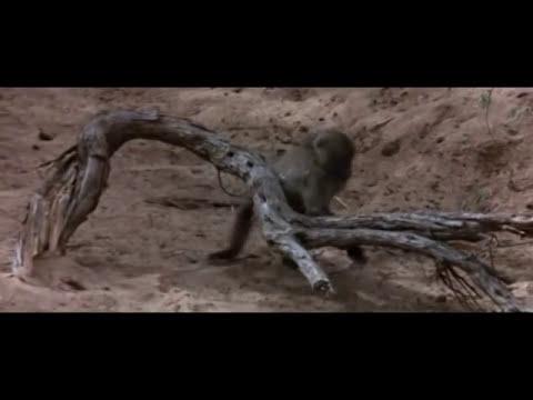Animales completamente borrachos ebrios jajajaja (PARAISO VIVIENTE DOCUMENTAL)
