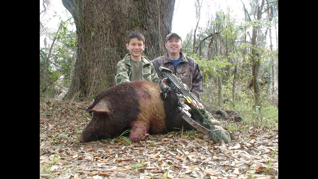 Free Range Wild Boar Bow Hunt In Florida For Hogs Youtube