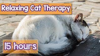 NEW, IMPROVED Relaxing Music for Cats! Calm Your Energetic Cat with this Soothing Music (2018) 🐕💤