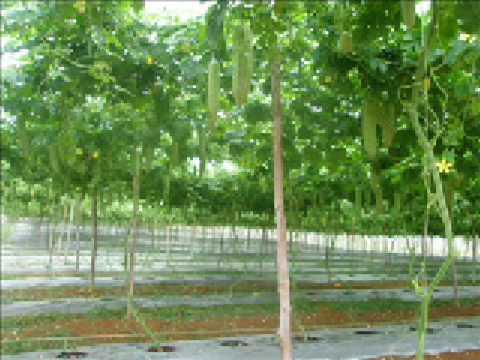 Peria Agroville