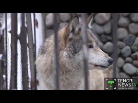 Зоопарк, Майк Науменко - Несоответствия
