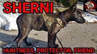 Sherni: Huntress, Protector, Friend   Episode 1- Scent Discrimination Training