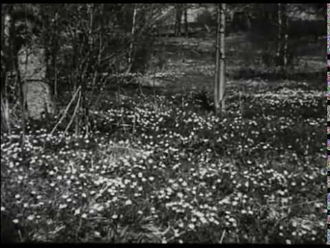 Sveriges Gröna Tröja (1951, SoL-film) (Visad: 9ggr, Betyg: , Antal kommentarer: 0st)