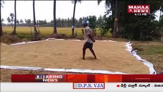 Rains cause Heavy Damage To Standing Crops @ East Godavari