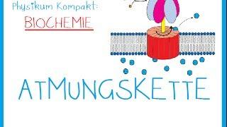 ATMUNGSKETTE -Biochemie