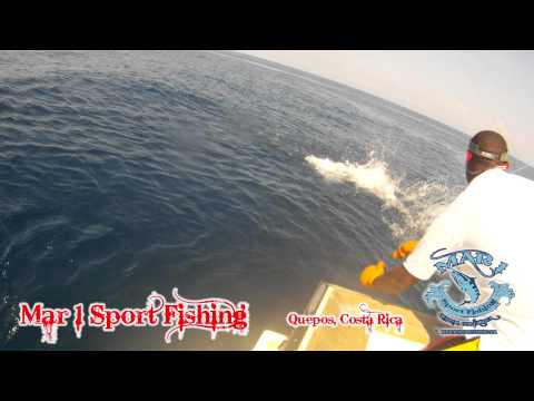 Mar 1 Sport Fishing   Sailfish Jumping January 31 2013