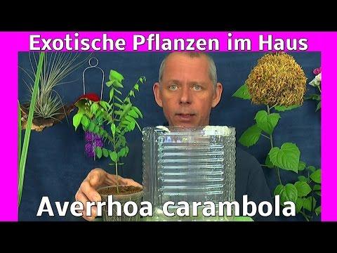 Exotische Pflanzen Vermehren