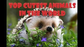 TOP CUTEST ANIMALS IN THE WORLD - ANIMALS COMPILATION 2018 - ANIMAL VINES - FUNNY AND CUTE ANIMALS