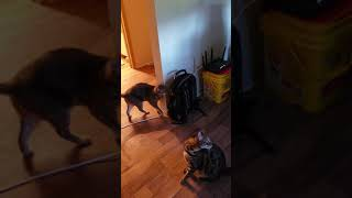 Loki and Grimm new toy part 1