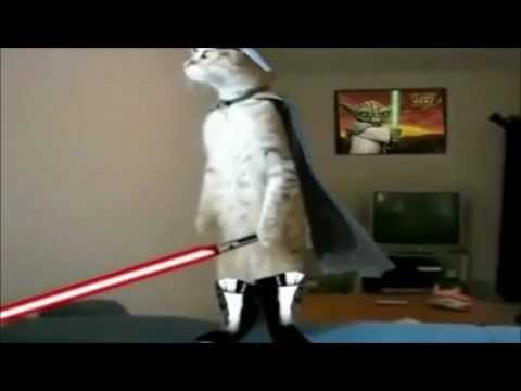 Jedi cats fights compy star wars .wmv