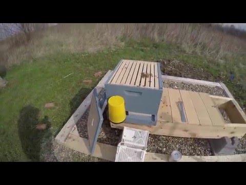 Backyard Beekeeping Bee Install Y1 V5
