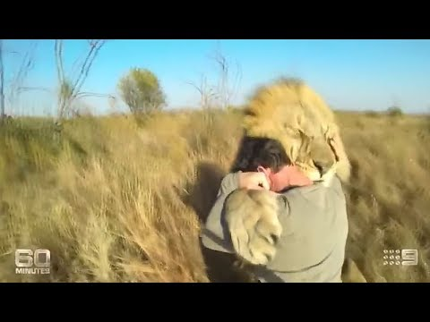 Lion Man - Kevin Richardson: The Lion Whisperer on 60 Minutes (2014)