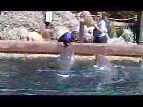 seaworld-dolphins-jumping-by-jeff-dean.html