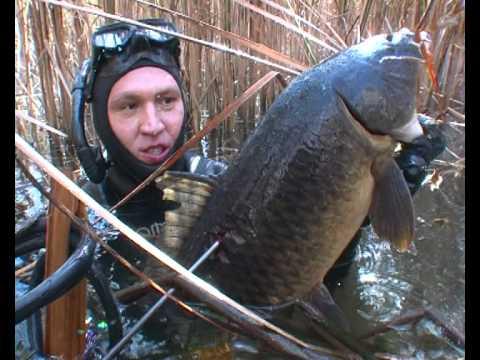 рыбалка с подводным ружьем