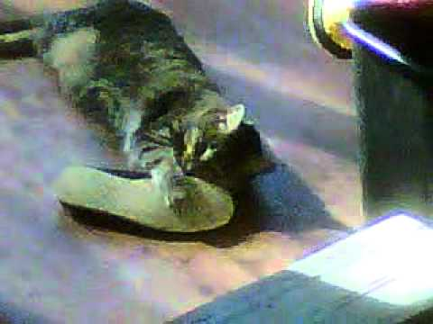 Our Cat Has Foot Fetish video