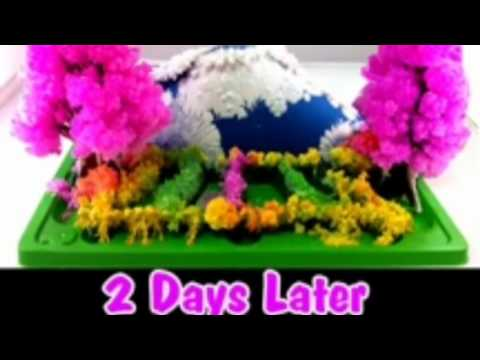 research paper crystal garden Observation conclusion research paper experiment pictures borax crystal in one day charcoal crystal garden.