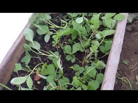 Тепличка своими руками.Урожай огурцов в начале июня