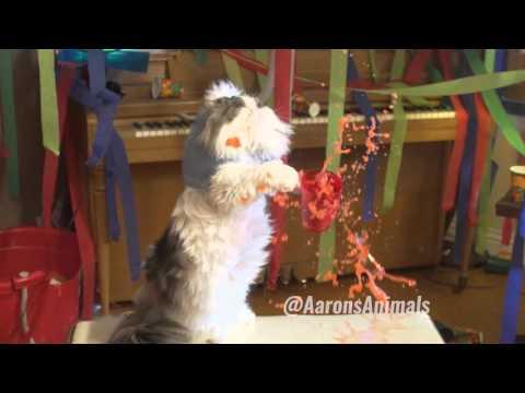 CGを巧みに使った猫の動きが可愛いホームパーティ!?