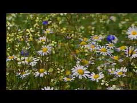 Matthieu Chedid - La Fleur