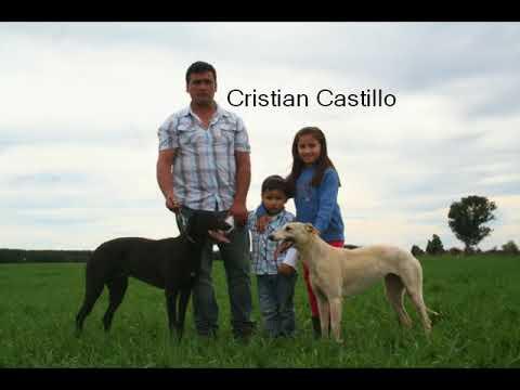 caza de liebres con galgos parral-chile 6