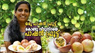 ഒരു പാഷൻ ഫ്രൂട്ട് കൊണ്ടു വീടുനിറയെ പാഷൻ ഫ്രൂട്ട് | Passion Fruit farming in Malayalam