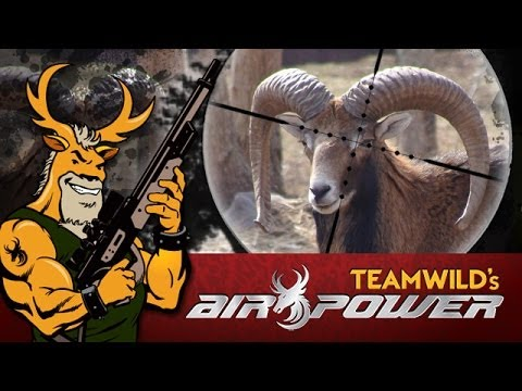 EXTREME Airgun Hunting - Mouflon Ram with the Benjamin Rogue