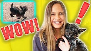 Dog Tricks With My Dog Coco! (Liv)
