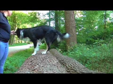 Wald- und Wiesenagility