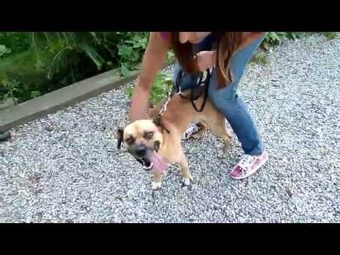 Pies wulkan energii szuka domu Centrum Weterynaryjne LASKI