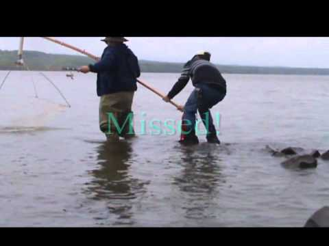 Fishing-Scapping for Herring on the Hudson River, Dutchess County New York