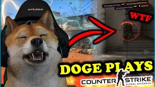 WHEN DOGE PLAYS CSGO! BEST OF DOG MOMENTS (Stream, Fails, Rage & Funny Moments)