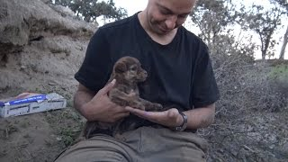 Brave Man Rescues 9 Abandoned Puppies From Deep Inside Cave