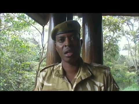 KWS digitizes ivory and rhino horn inventory