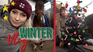 LAST CHRISTMAS PHOTO | PFERDEZIMMER | Winter Vlog | BinieBo