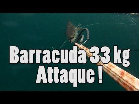 Barracuda attack