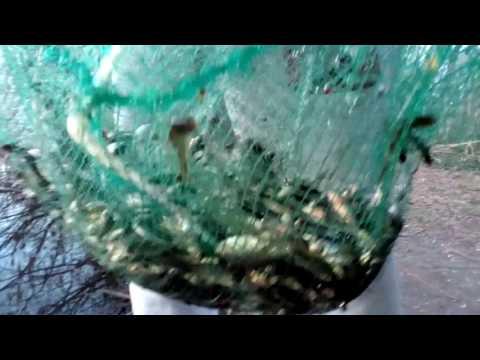 рыбалка на ракаловку