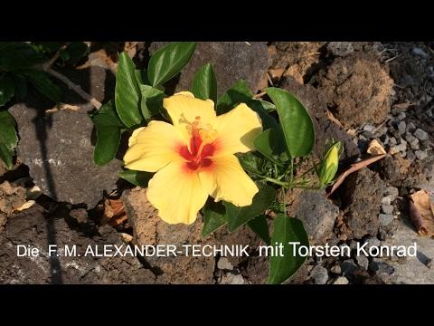 EINFACH GUT DASTEHEN - Alexander-Technik mit Torsten Konrad
